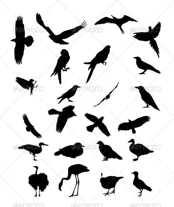 Birds Silhouettes - Animals Characters