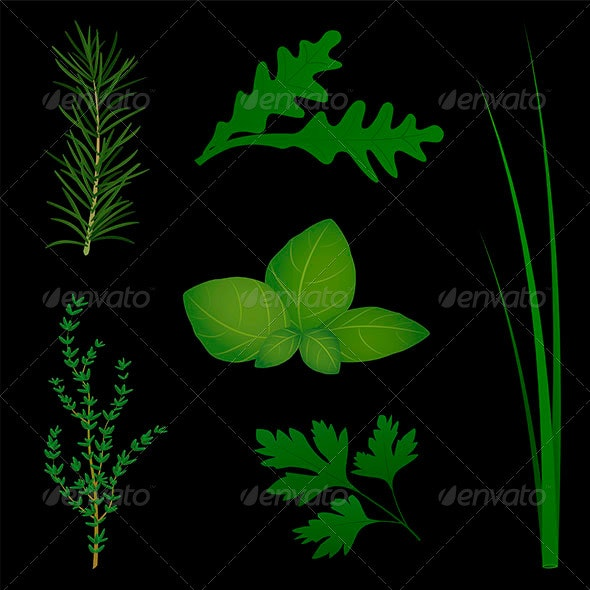 Culinary Herbs Black - Food Objects