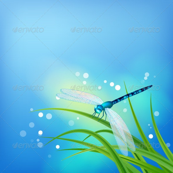 Dragonfly on Grass Blade - Seasons Nature