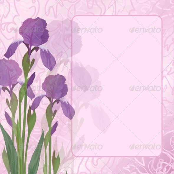 Flowers Iris on Pink Background - Flowers & Plants Nature