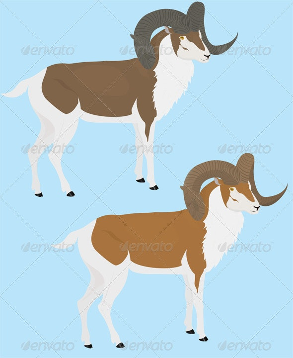 Long Horn Goat - Animals Characters