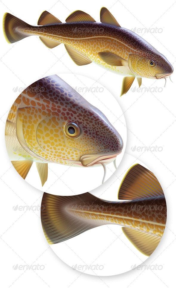 Atlantic Cod - Animals Characters