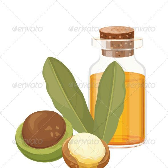 Macadamia Oil Vector Illustration
