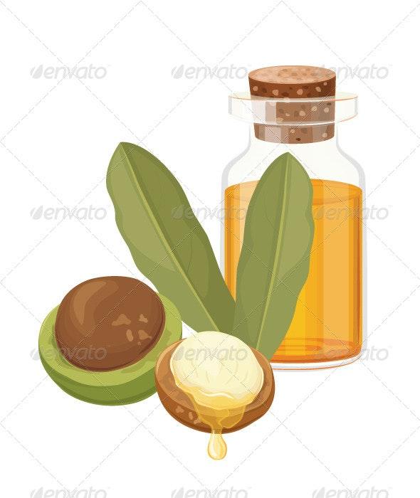 Macadamia Oil Vector Illustration - Vectors