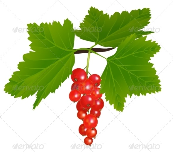 Redcurrant - Food Objects