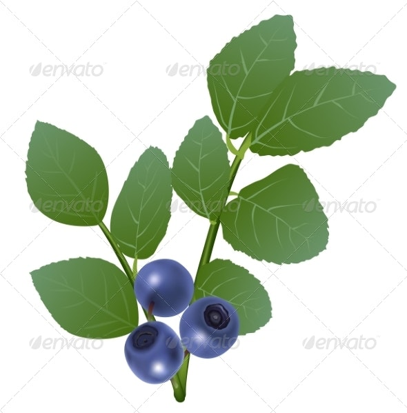 Blueberry - Food Objects