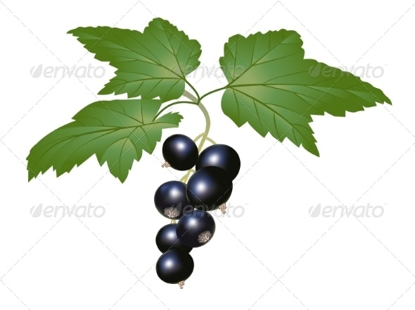 Blackcurrant - Food Objects
