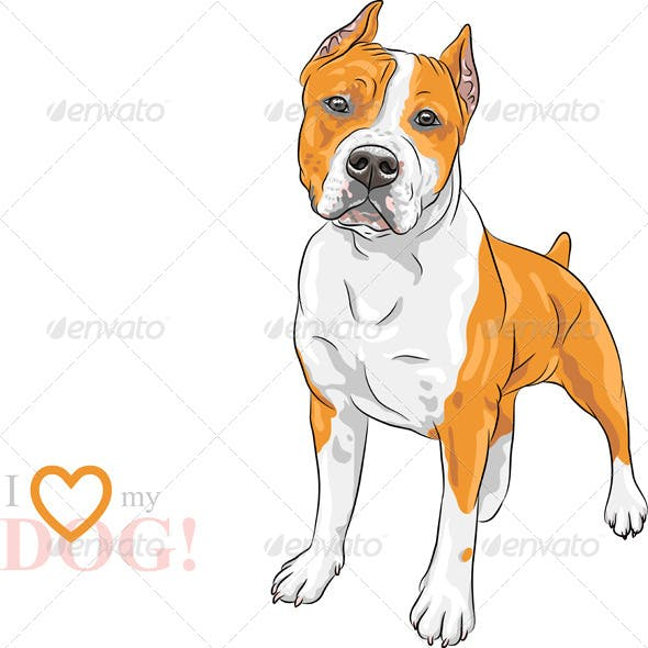 Vector Dog American Staffordshire Terrier breed