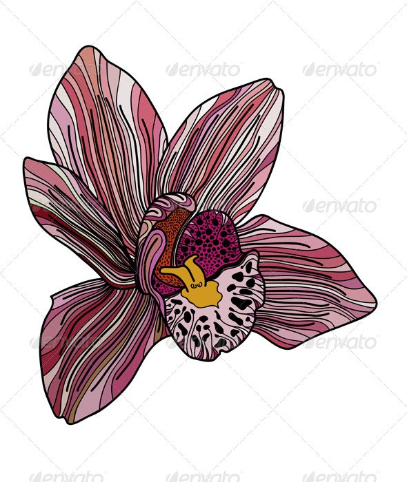 Exotic Orchid Painted in Pink Colors - Flowers & Plants Nature