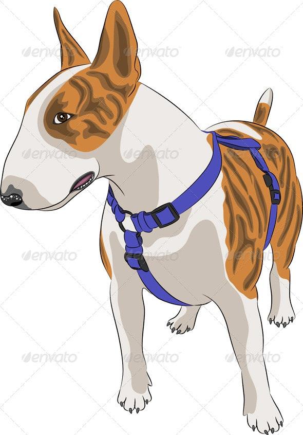 Bull Terrier Dog - Animals Characters