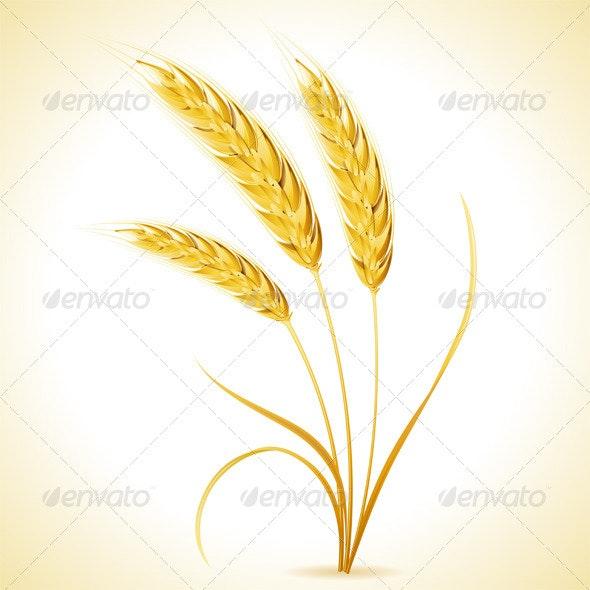 Ears of Barley - Flowers & Plants Nature