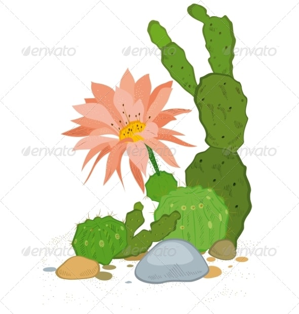 Hand Drawn Cactus Blooms - Flowers & Plants Nature