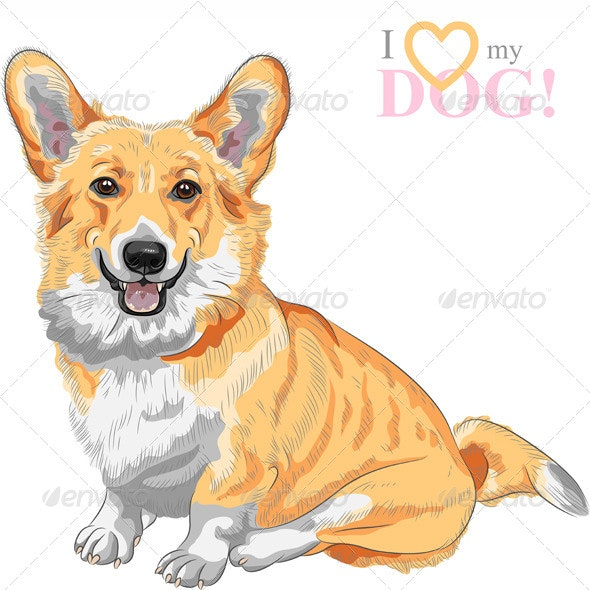 Vector Sketch Dog Pembroke Welsh Corgi Smiling - Animals Characters