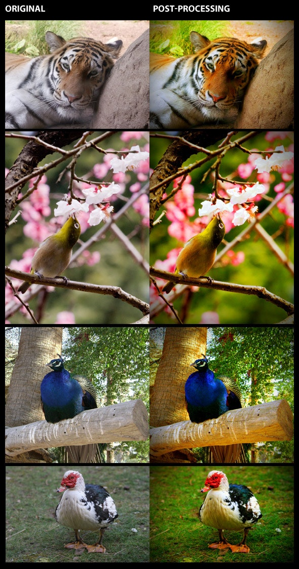 Nature Action Set - Photo Effects Actions