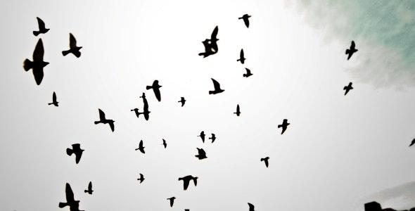 8 Birds Silhouette Brushes - Brushes Photoshop