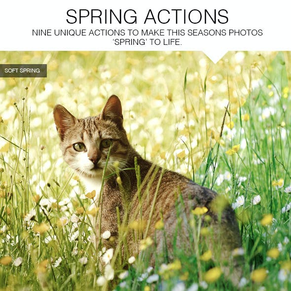 Spring Actions