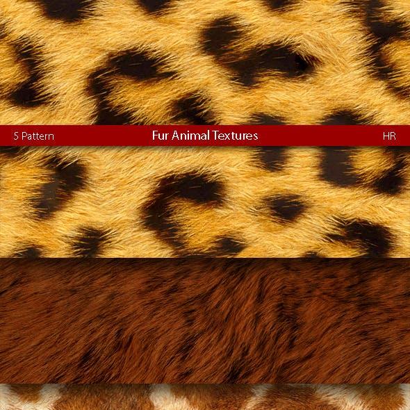 Fur Animal Patterns