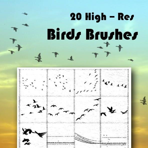 Bird Brushes