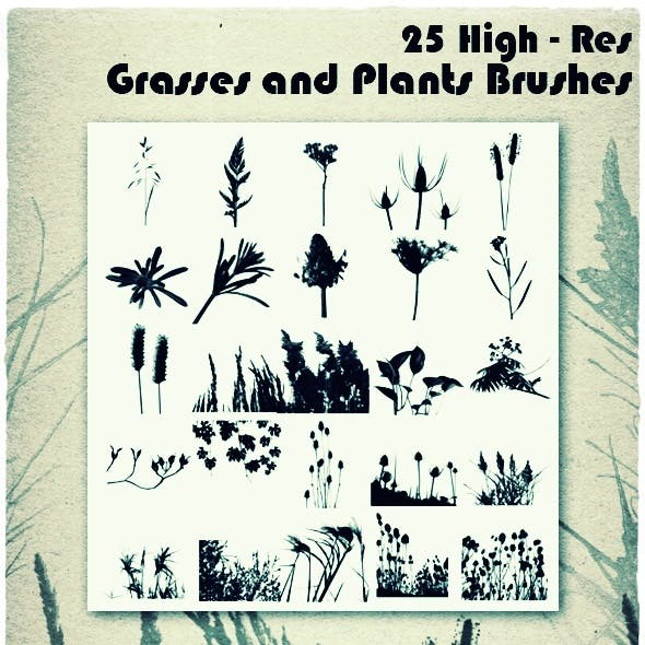 Grasses and Plants Brushes