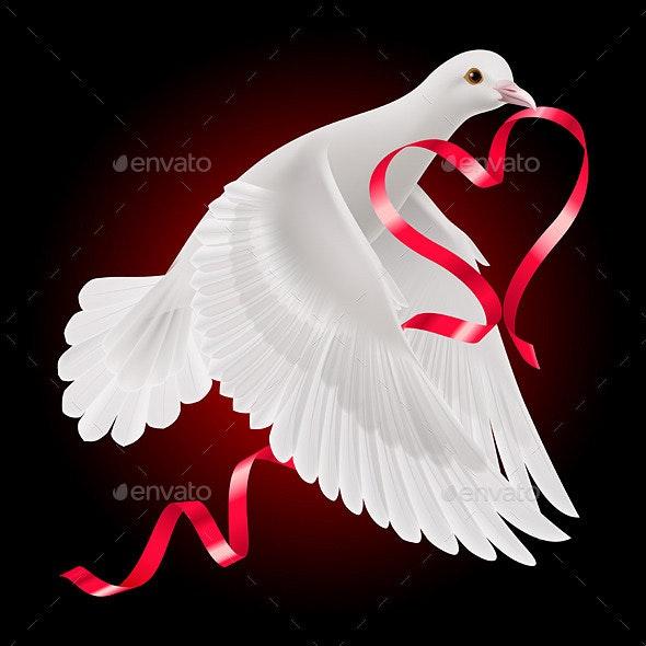 Dove - Animals Characters