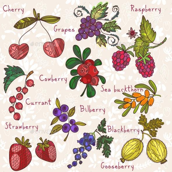 Bright Berries - Decorative Vectors