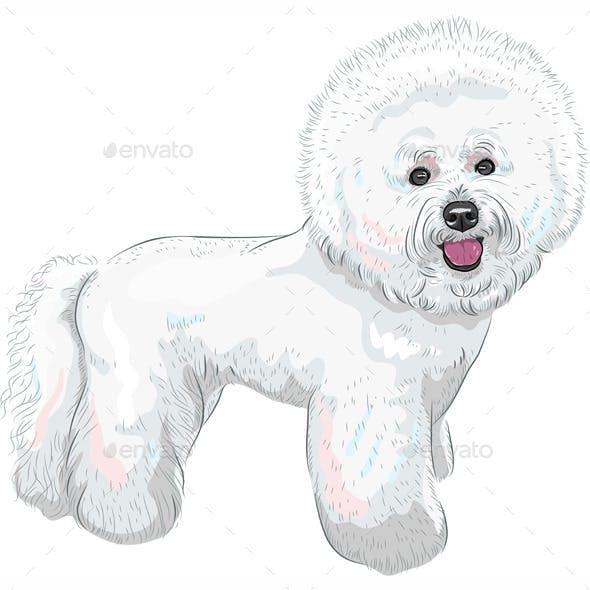 Bichon Frise Breed Dog
