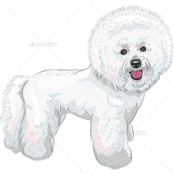 Bichon Frise Breed Dog - Animals Characters