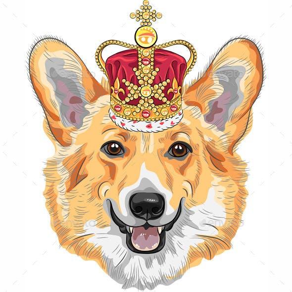 Dog Pembroke Welsh Corgi breed in Gold Crown