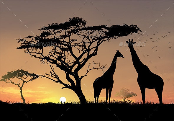 African Sunset - Graphics