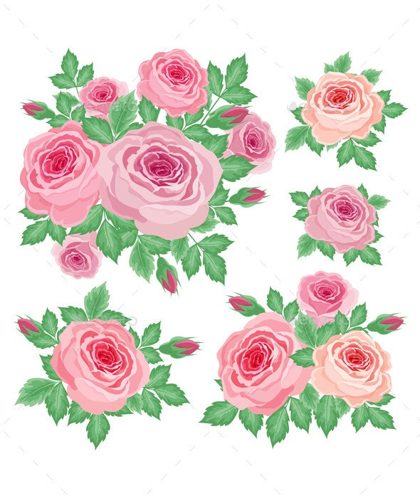 Set of Roses - Decorative Vectors