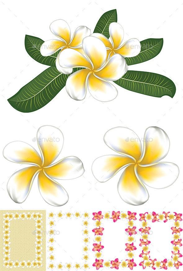 White Plumeria (Frangipani) - Flowers & Plants Nature