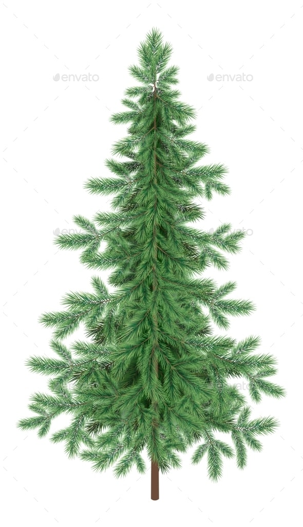 Christmas Green Spruce Fir Tree Isolated - Flowers & Plants Nature