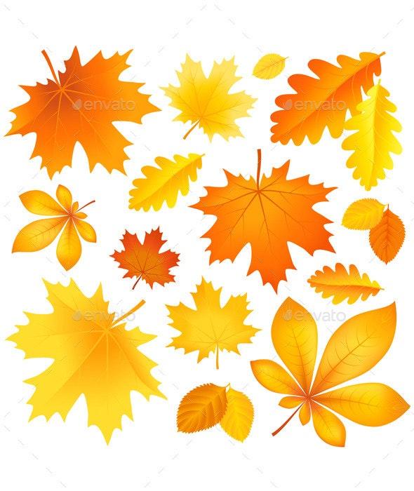 Set Autumn Leaves - Seasons Nature