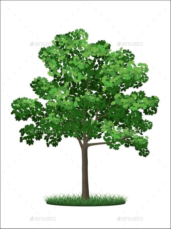 Green Maple Tree - Flowers & Plants Nature