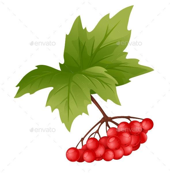 Branch of Viburnum - Flowers & Plants Nature