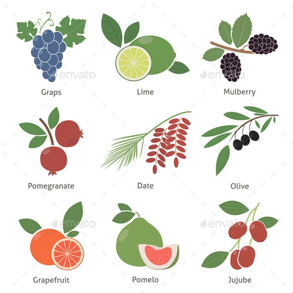 Fruits and Berries - Organic Objects Objects