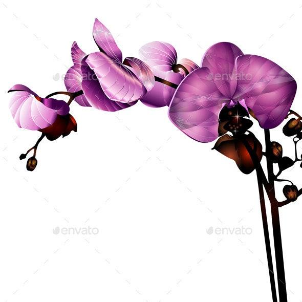 Flower - Valentines Seasons/Holidays