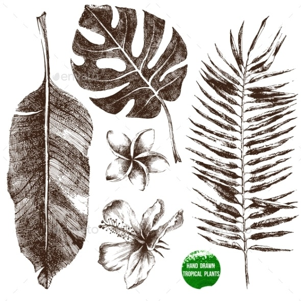 Hand Drawn Tropical Leaves and Flowers - Flowers & Plants Nature