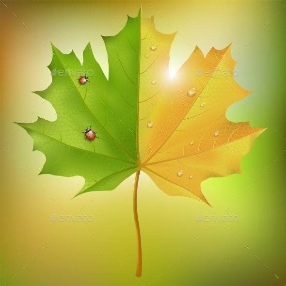 Maple Leaf Summer Autumn - Seasons Nature