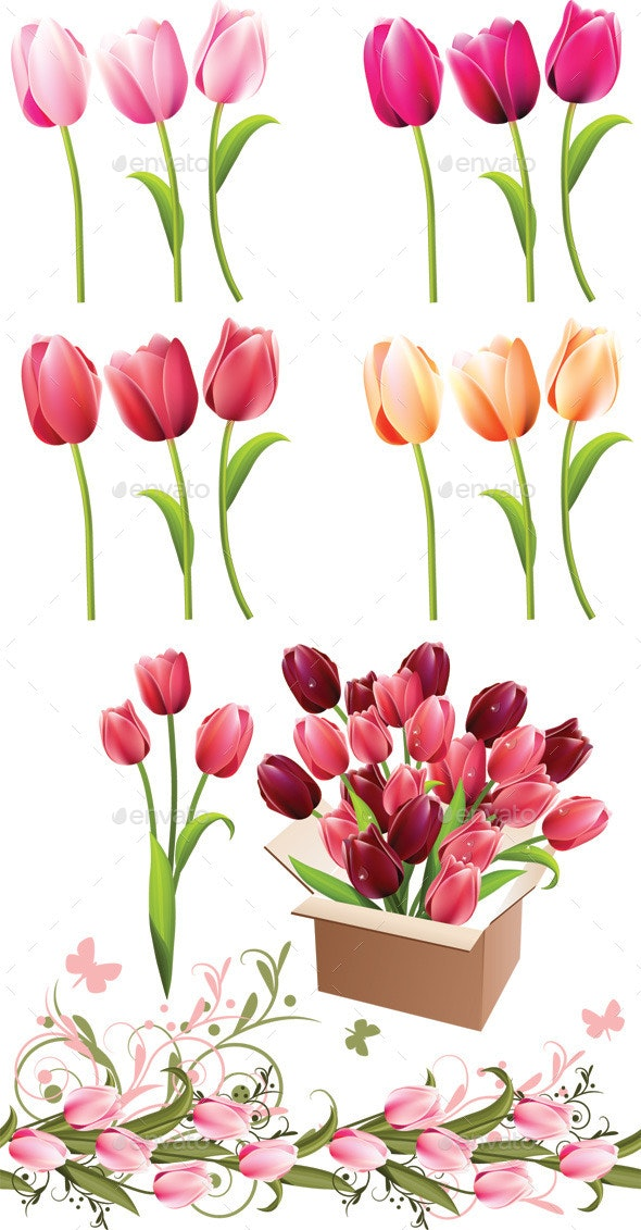 Realistic Tulips on White Different Colors - Flowers & Plants Nature