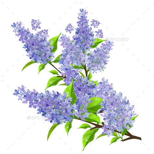 Branch of Lilac with Leaves - Flowers & Plants Nature