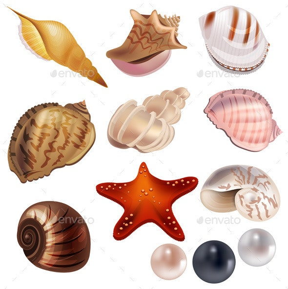 Set with Realistic Shells and Pearls - Organic Objects Objects