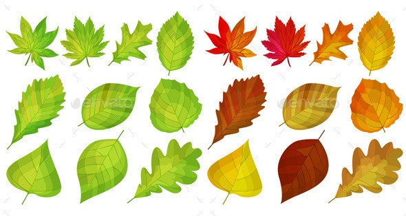 Set with Different Autumn and Green Lleaves - Organic Objects Objects