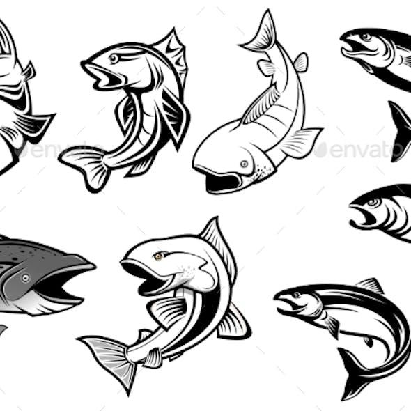 Cartoon Salmons Fish Set