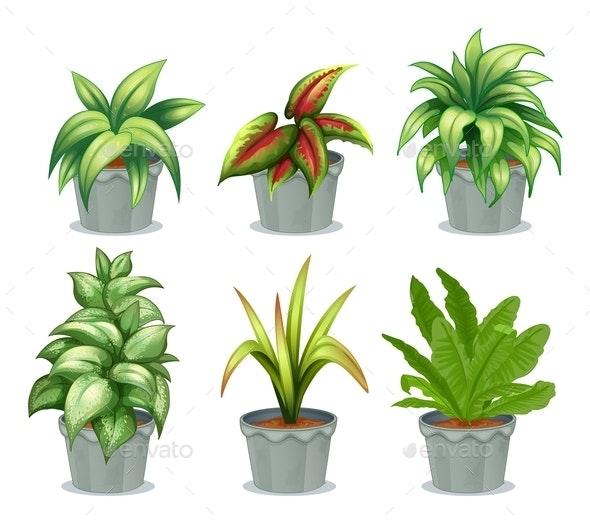 Green Leafy Plants - Flowers & Plants Nature