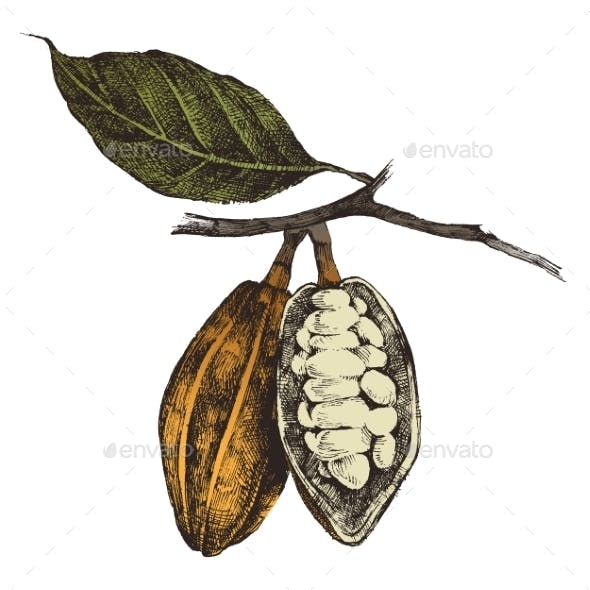 Hand Drawn Cocoa Beans