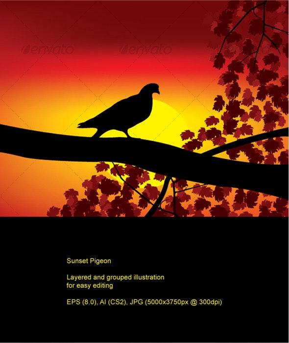 Sunset Pigeon - Backgrounds Decorative