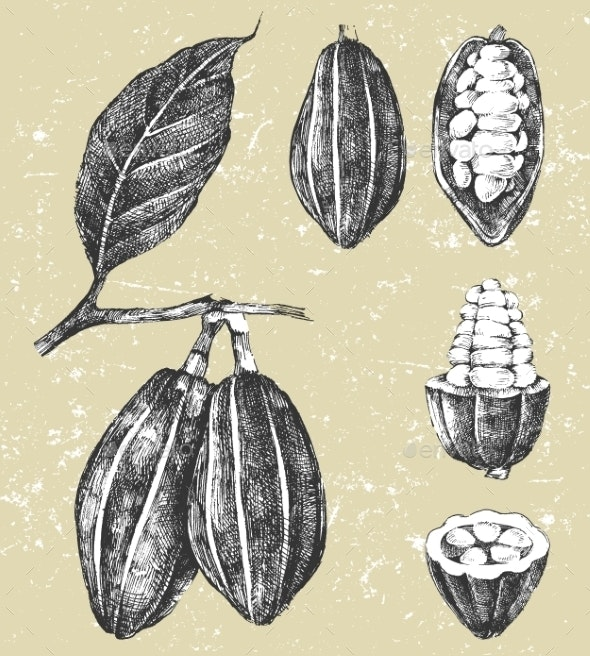 Hand Drawn Cocoa Beans Set - Nature Conceptual