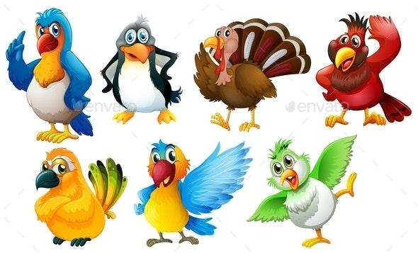 Different Species of Birds - Animals Characters