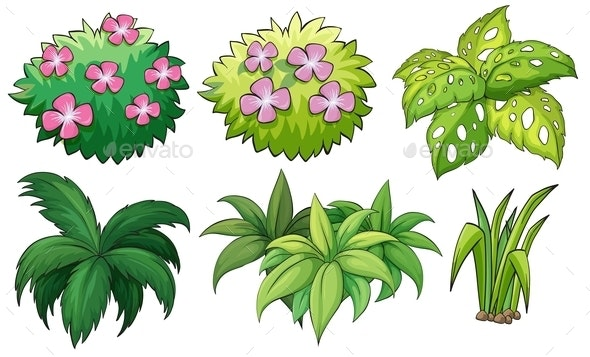 Six Ornamental Plants - Flowers & Plants Nature